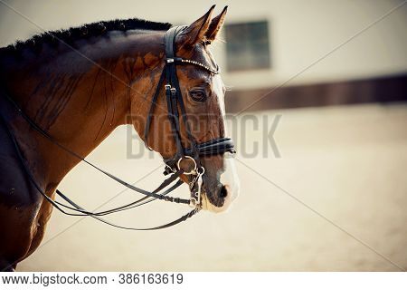 Portrait Sports Red Stallion With A White Groove On His Forehead In The Double Bridle. The Neck Of A