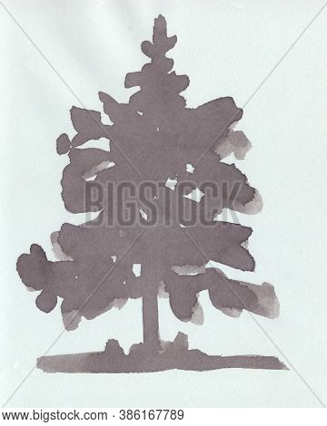 Young Pine, Silhouetted Monochrome Drawing On A Light Background
