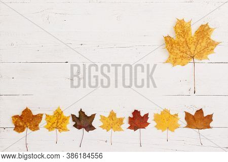 Maple Leaves Of Different Colors Lie On The Bottom Edge Of A Wooden Table. On The Side Is A Large Ye