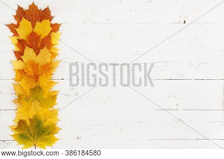 On The Table Are Maple Leaves Of Different Colors. Colorful Autumn Leaves With The Edge Of A White W