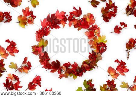 Circle Frame Of Red Autumnal Leaves And Berries Viburnum ( Viburnum Opulus ) On A White Background W