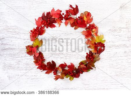 Circle Frame Of Red Autumnal Berries And Leaves Viburnum ( Viburnum Opulus ) On A White Painted Wood