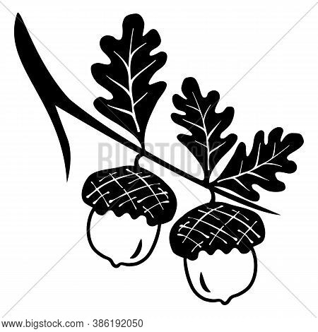 Oak Branches With Leaves And Acorns, Black Silhouettes On White Background. Oak Leaf And Acorn Icon