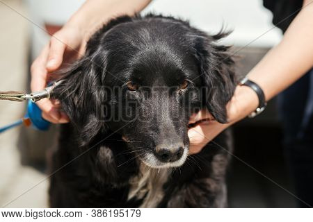 Person Hugging Adorable Dog In Sunny Street, Homeless Doggy