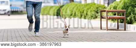 Partial View Of Man In Jeans Running Along Alley With Jack Russell Terrier Dog On Leash, Horizontal