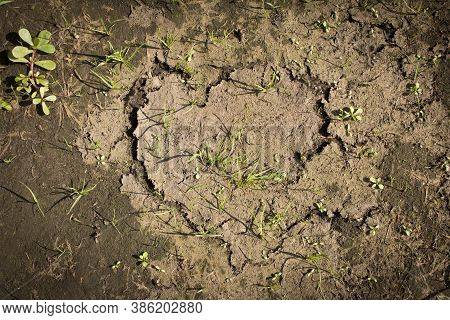 Cracks In The Dry Ground. Texture Of Dry Earth With Grass Sprouts