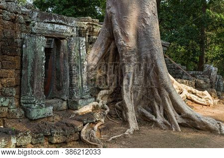 Giant Tree Covering An Ancient Temple In Siem Reap