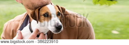 Partial View Of Man Holding White Jack Russell Terrier Dog With Brown Spots On Head, Panoramic Conce