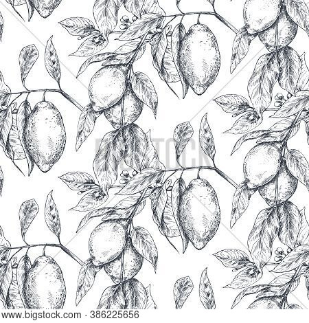 Vector Seamless Pattern With Hand Drawn Fresh Lemon Tree Branches, Fruits And Flowers In Sketch Styl