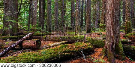 Rain Forest In Vancouver , British Columbia, Canada, Banner Side
