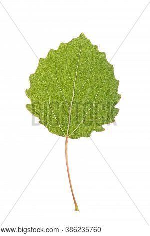 Green Aspen Leaf Isolated On White Background