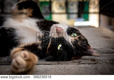 Street Cat Stretching Out Spotted In Chania, Greece