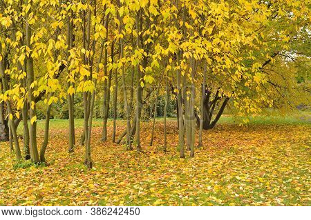 Golden Autumn In A Very Beautiful Park
