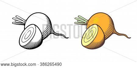 Vector Hand Drawn Illustration Of Turnips. Whole Turnip And Cross Section. Outline And Colored Versi