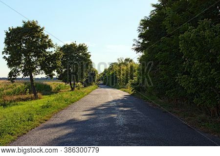 Scenic View Old Rural Asphalt Road With Tree Tunnel In Summer Sunny Afternoon. Scenic Natural Tunnel