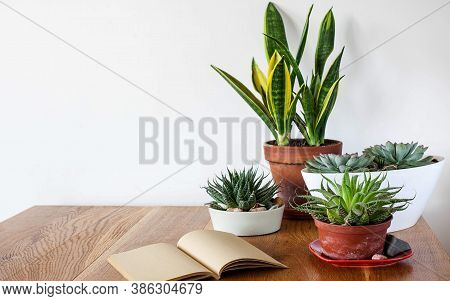 A Variety Of Succulents And Home Plants On A Wooden Table. Concept Of Home Plants, Care Of Home Succ