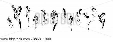 Set Of Forget-me-not Hand Drawn Flowers. Black Isolated Sketch Botanical Vector Illustration On Whit