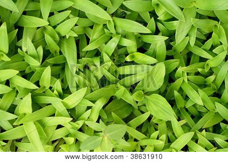 Tiny Green Leaves For Background