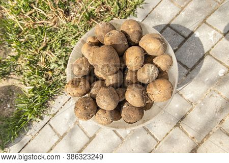 Bucket Of Potatoes On The Stone Path Next To The Grass Top View. The Concept Of Harvest In The Fall.