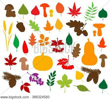 Autumn Nature Silhouettes With Vector Fallen Leaves, Harvest Vegetables, Fruits And Mushrooms. Pumpk
