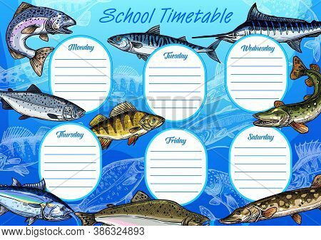 School Timetable Vector Template With Education Schedule Of Student Lessons. Study Plan Or Weekly Pl