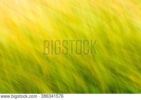 Blurred Background With Nature Colors Of Yellow & Green Obtained By Intentional Camera Movement.