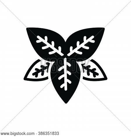 Black Solid Icon For Basil  Tulsi Lamiaceae Thyme Greenery Sweet-basil Condiment Spice Flavor Ingred