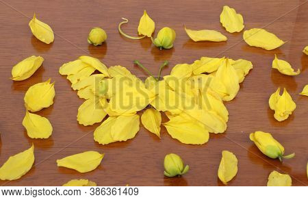 Yellow Petal Of Golden Shower Flower Set To Butterfly Shape And Corolla Flower Put Around On The Woo