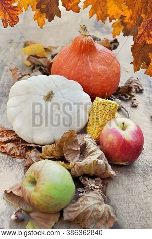 Squashes And Apples In Brown Leaves And Oak Leaves Bordering The Top