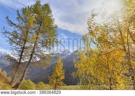 Beautiful Golden Foliage Of Trees In Alpine Mountain
