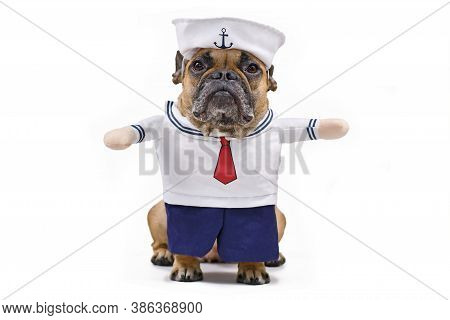 Funny French Bulldog Dressed Up With A Cute Sailor Dog Halloween Costume With Sailor Hat, Bue Pants