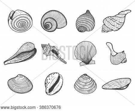 A Set Of Empty Seashells. The Sketch Shells Of Molluscs, Shellfish, Mussels, Nautilus. The Engraved