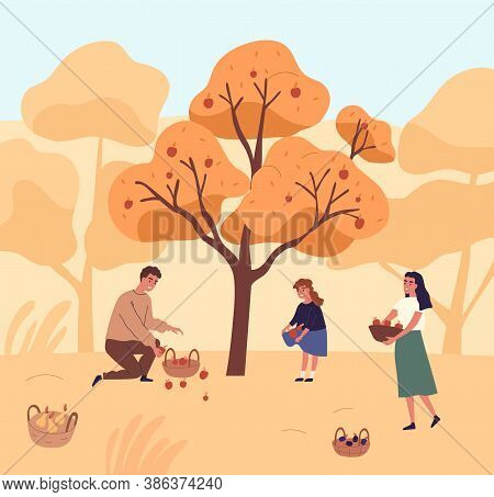 Cute Family Picking Apples In Garden Vector Flat Illustration. Happy Mother, Father And Daughter Gat