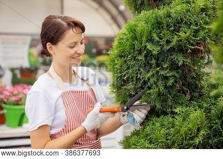 Worker Use Secateurs Trim Cutting Pruning Conifer Shrubs Garden Shears