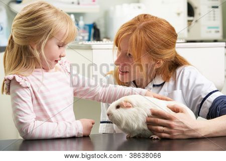 Female Veterinary Surgeon Examining Child's Guinea Pig In Surgery