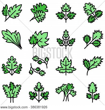 Parsley Icons Set. Outline Set Of Parsley Vector Icons Thin Line Color Flat On White