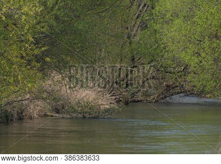 Trees And Water In An Alluvial Forest, Wetland Habitat In Nature