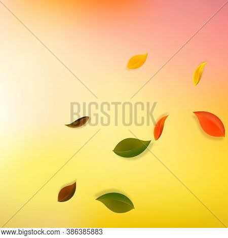 Falling Autumn Leaves. Red, Yellow, Green, Brown Neat Leaves Flying. Corner Colorful Foliage On Uniq