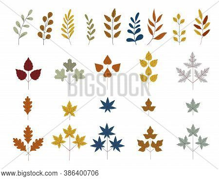 Fall And Autumn Leaves. Set Of Tree Branches. Botanical Forest Plants Or September October Tree Foli
