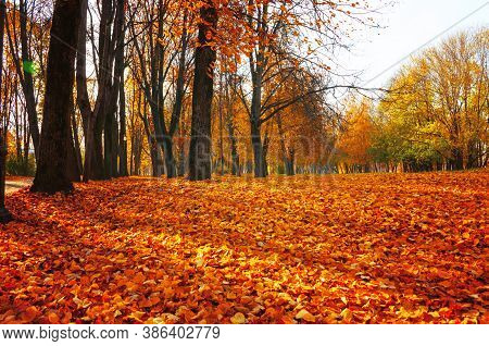 Fall sunny landscape. Fall park trees and fallen autumn leaves on the ground along the park alley in sunny fall October day. Selective focus at the fall leaves on the foreground