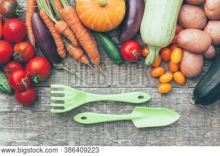 Assortment Different Fresh Organic Vegetables And Gardening Tools On Country Style Wooden Background