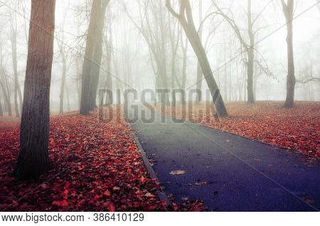Fall picturesque November foggy landscape. Deserted fall park with bare autumn trees and dry fallen red fall leaves, fall nature scene. Autumn foggy background