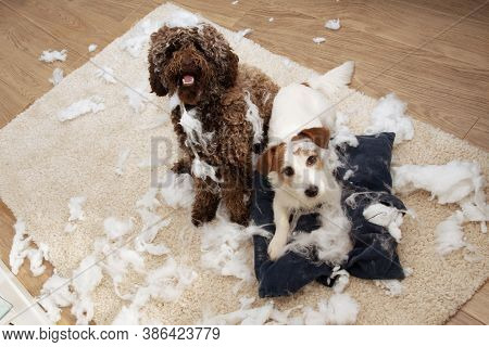 Dog Mischief. Two Dogs With Innocent Expression After Destroy A Pillow. Separation Anxiety And Obedi