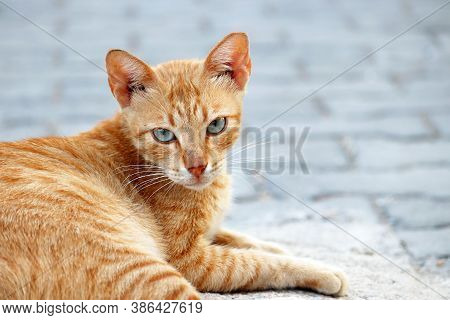 Ginger Cat Sitting On A City Street. Сute Pet Outdoor