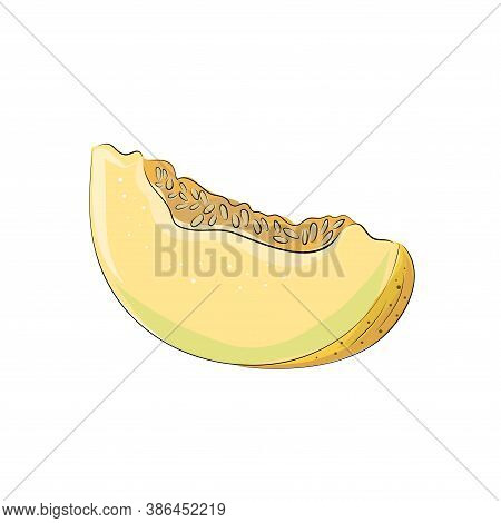 Set Of Hand Drawn Vector Illustration Of Yellow Melon Fruit Against White Background. Whole, Sliced,