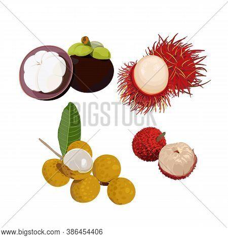 Thai Fruits Vector Consist Of Mangosteen, Rambutan, Longan And Lychee With Flesh Of Fruit. Illustrat