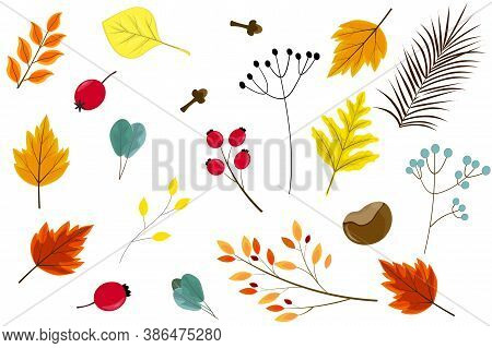 Colorful Autumn Set Of Botany Elements: Colorful Leaves, Flowers, Twigs With Berries, Carnation, Che
