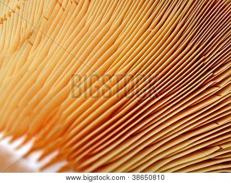 Abstract Fungus Closeup, Season Details