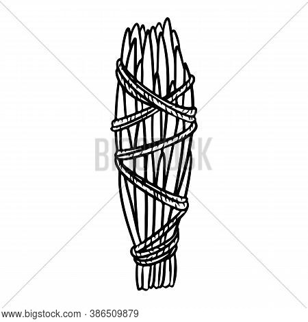 Cedar Smudge Stick Tied With Thread Hand-drawn Doodle Isolated Icon. Vector Stock Plant Leaves Logo.