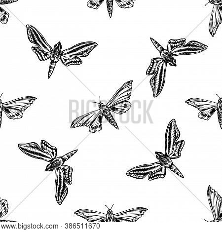 Seamless Pattern With Black And White Ambulyx Moth, White-banded Hunter Hawkmoth Stock Illustration